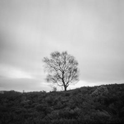 Tree near Eyam Moor II
