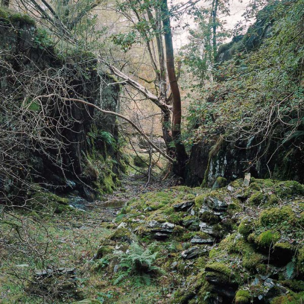 Secret Quarry at Hodge Close I